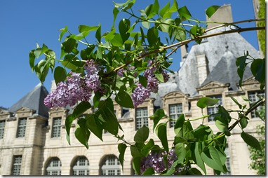 Lilac in Paris April 2014 (1 of 1)